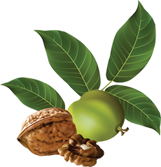 Walnuts International